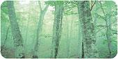 С ионизатором Daiseikai, вы сможете дышать кристально чистым, наполняющим силами и здоровьем воздухом у себя дома и в любое время.